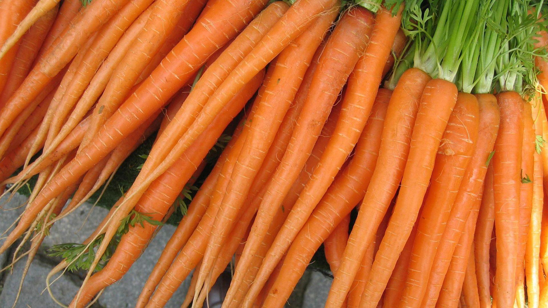 Producción y comercialización de zanahorias en La Rioja