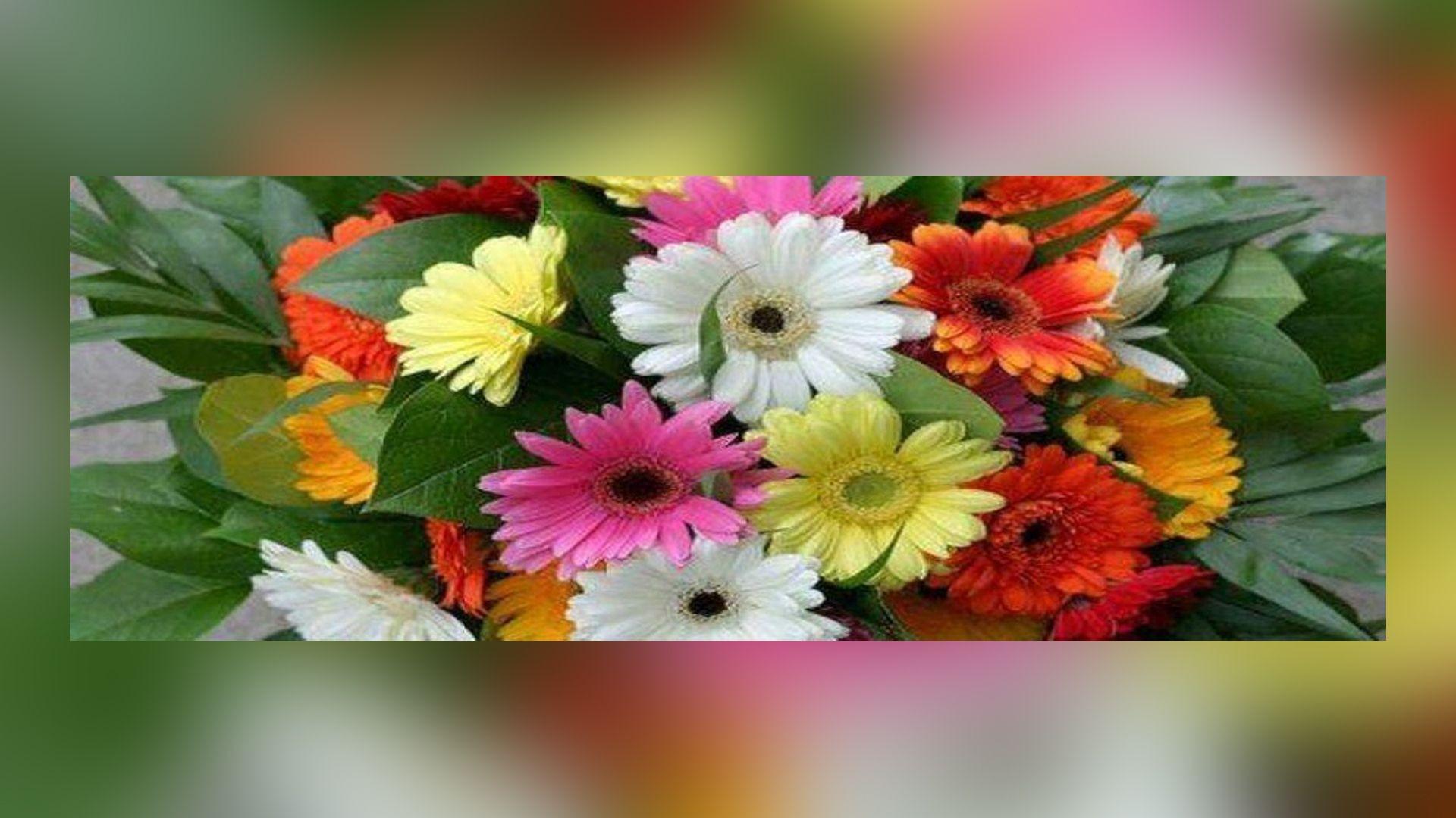 Flores pra decorar en A Coruña