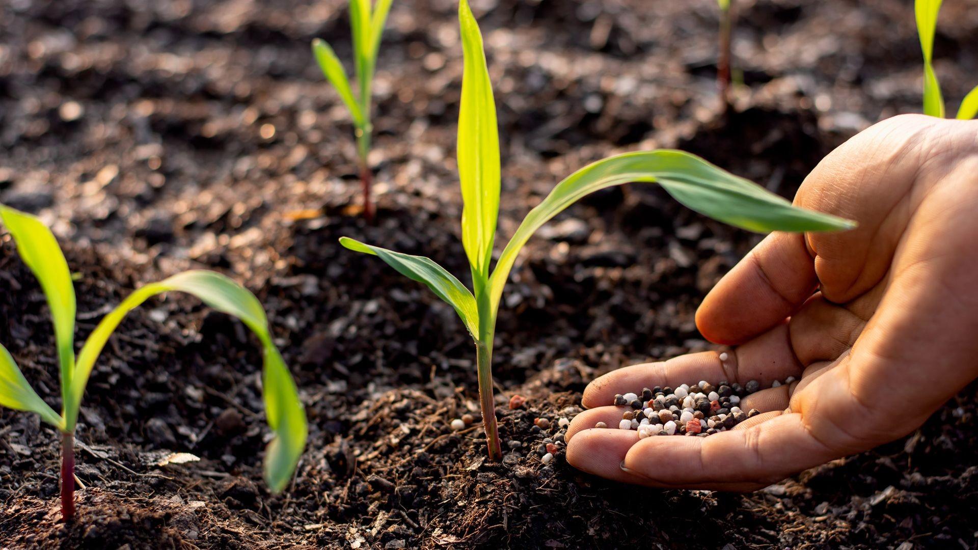 Fertilizantes para plantas en Alicante