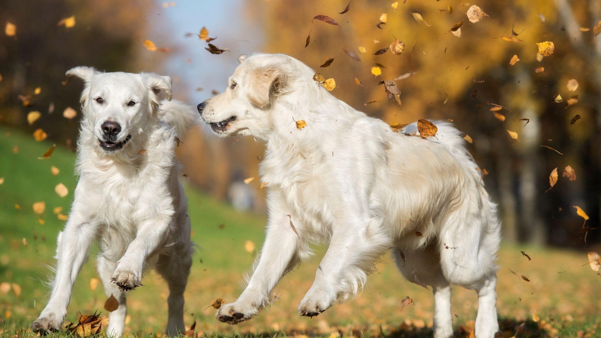 Centro de adiestramiento canino en Valencia