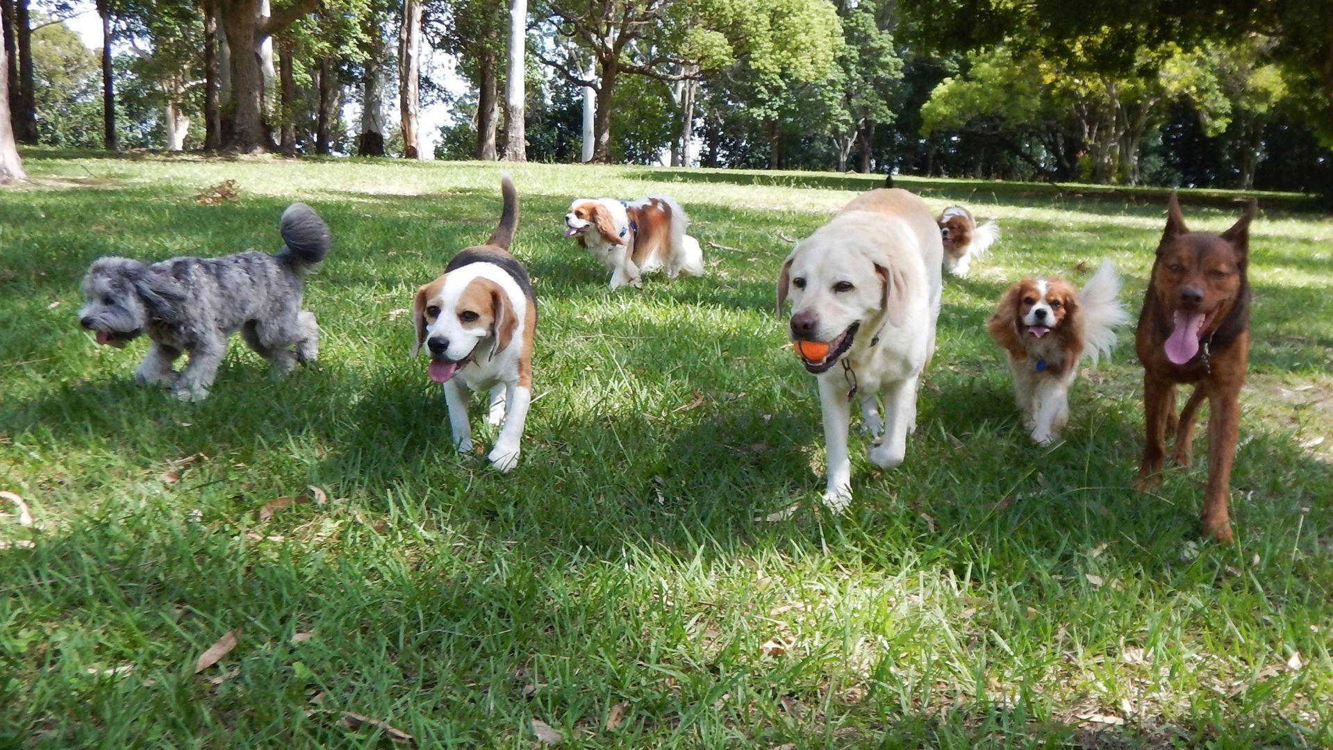 Centro de ocio canino en Valencia