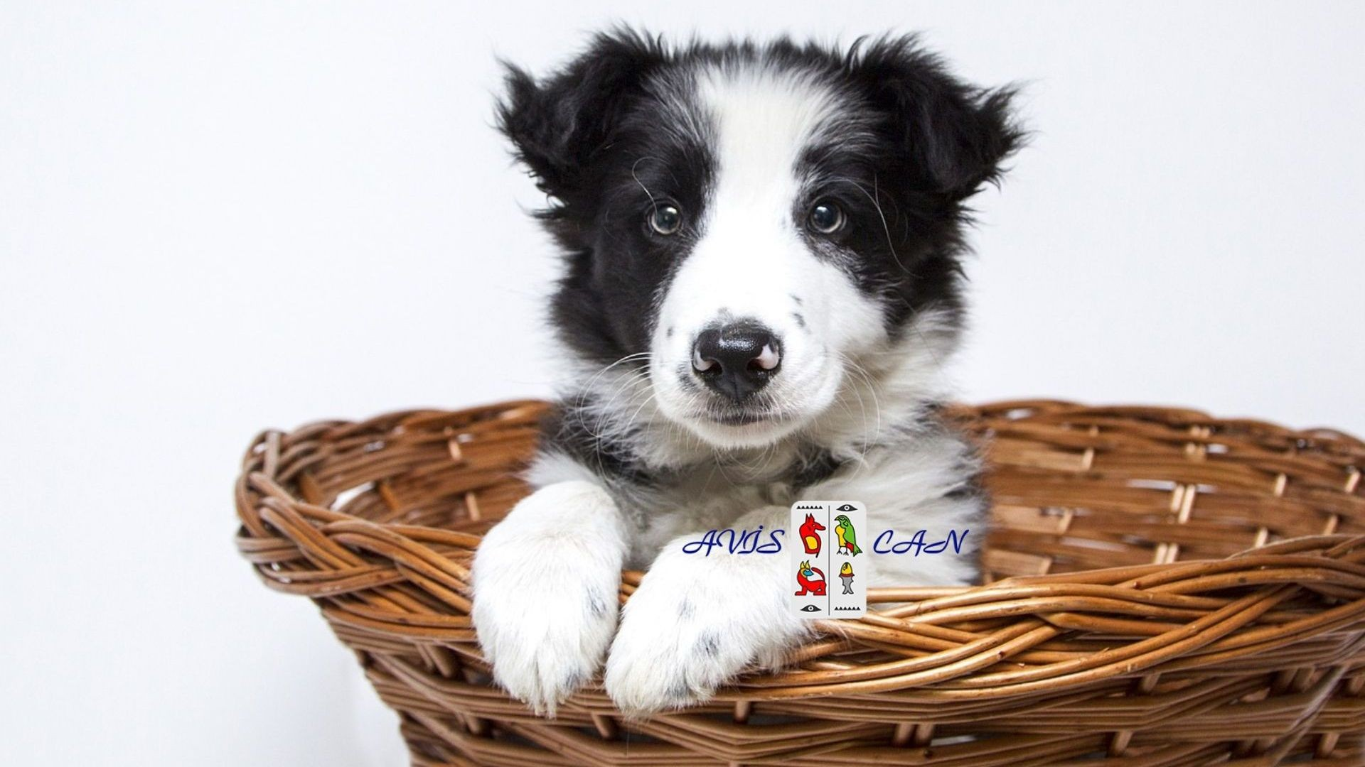 consulta veterinaria (1)