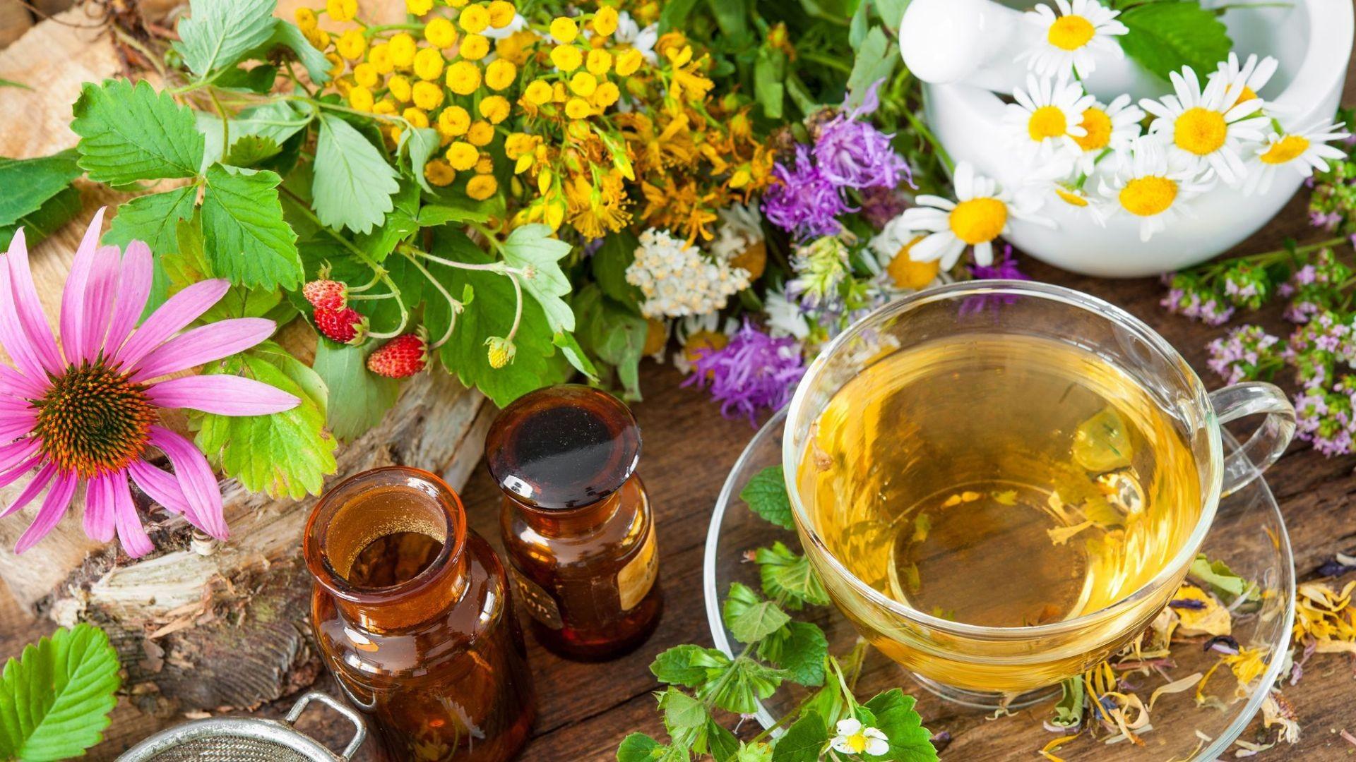 000 herbolario medicina natural plantas medicinales  (3)