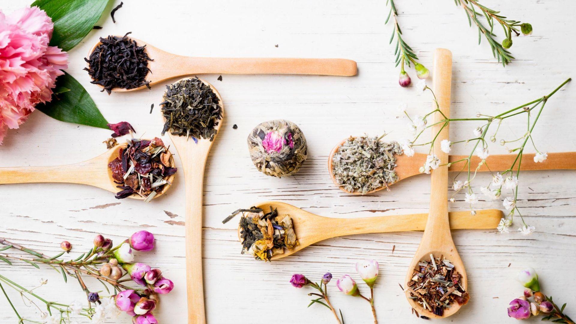 000 herbolario medicina natural plantas medicinales  (2)