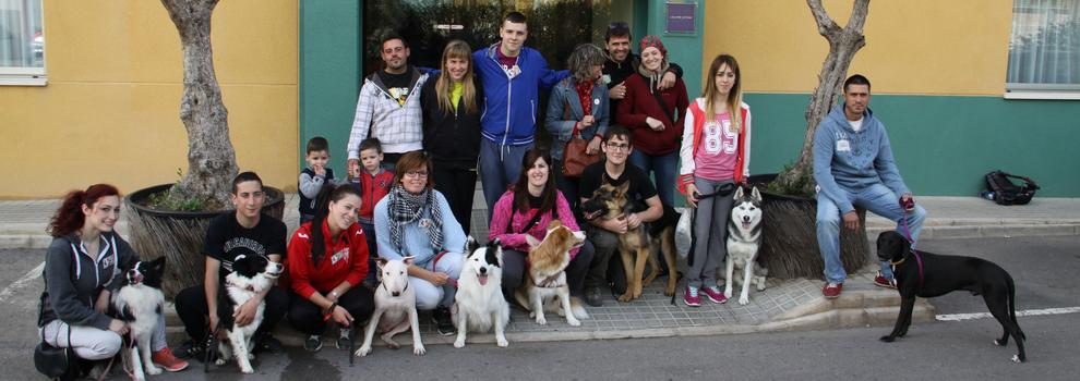 Adiestramiento, Deportes cinológicos,   en Elche | Centro Canino Ciudad de Elche
