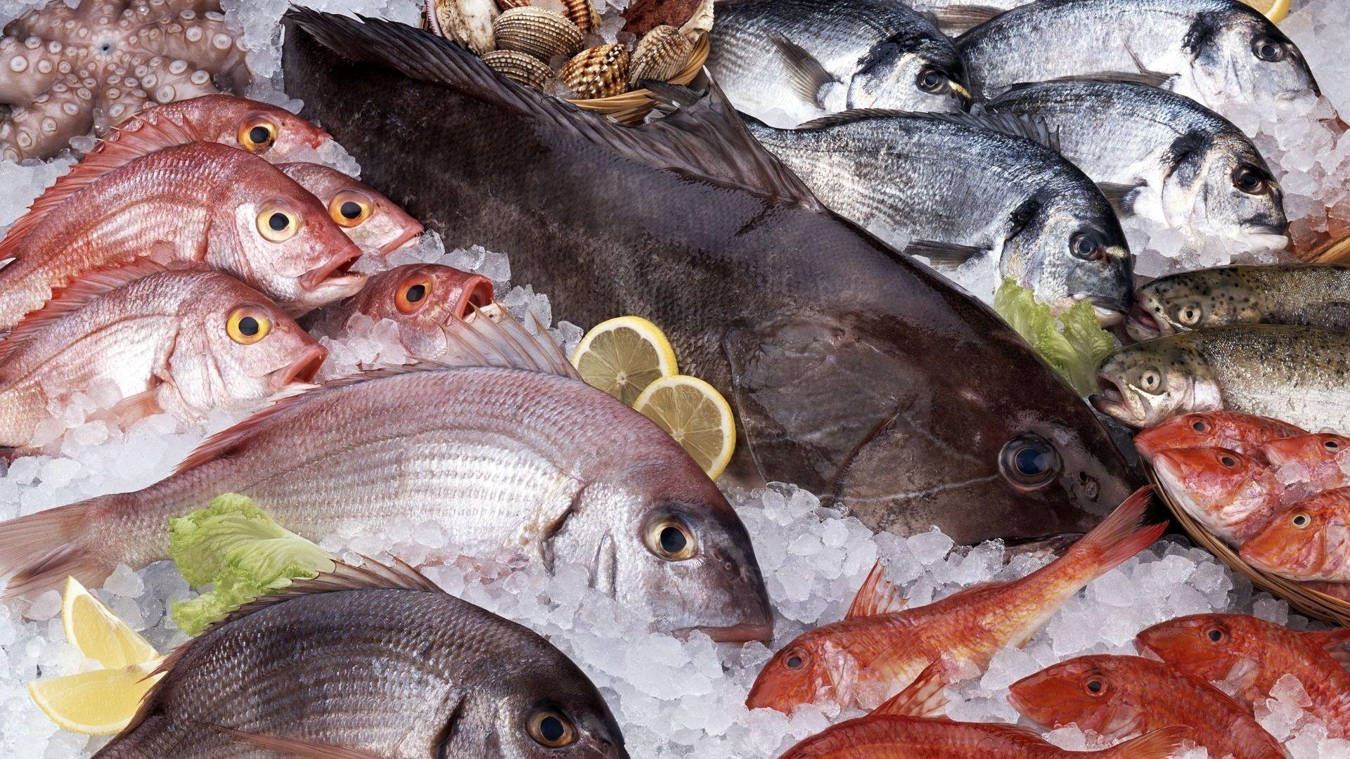 Mayorista de pescado y marisco frescos en Vitoria
