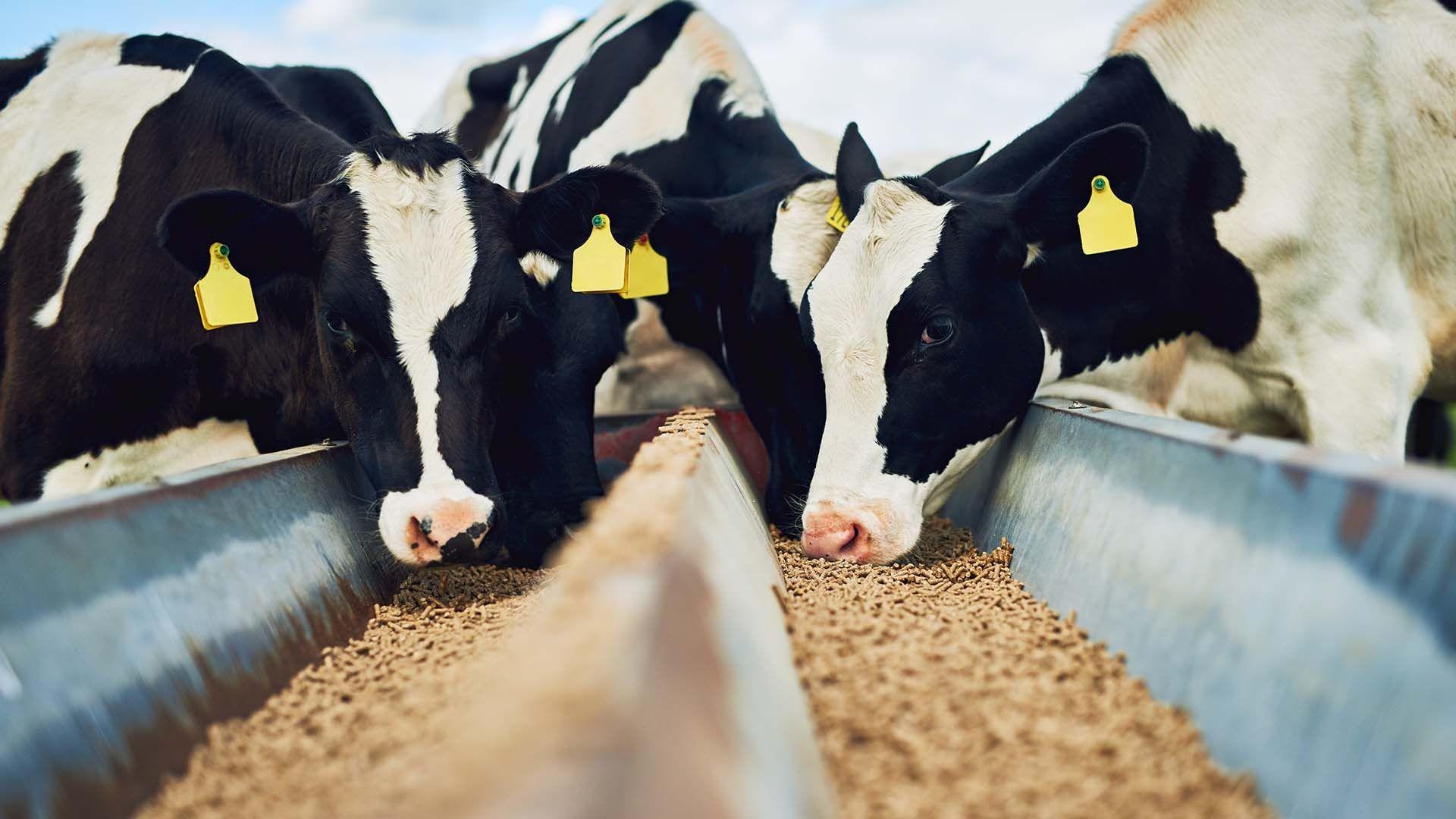 Especialistas en alimentación para animales de granja