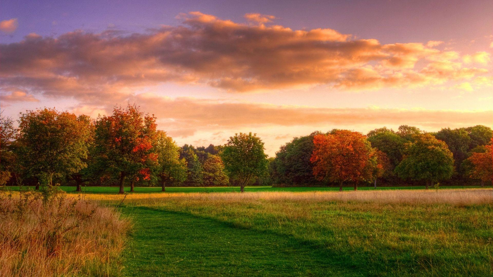 Natural-landscape-autumn-sunrise-forest-sky-clouds_2560x1600