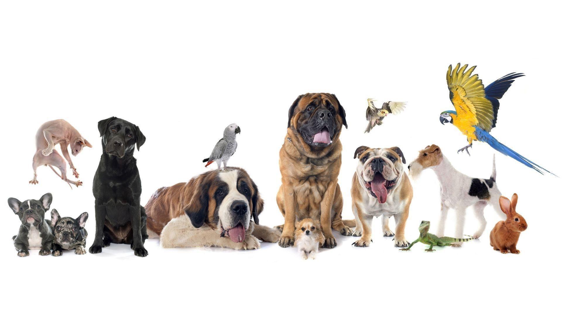 Foto animales