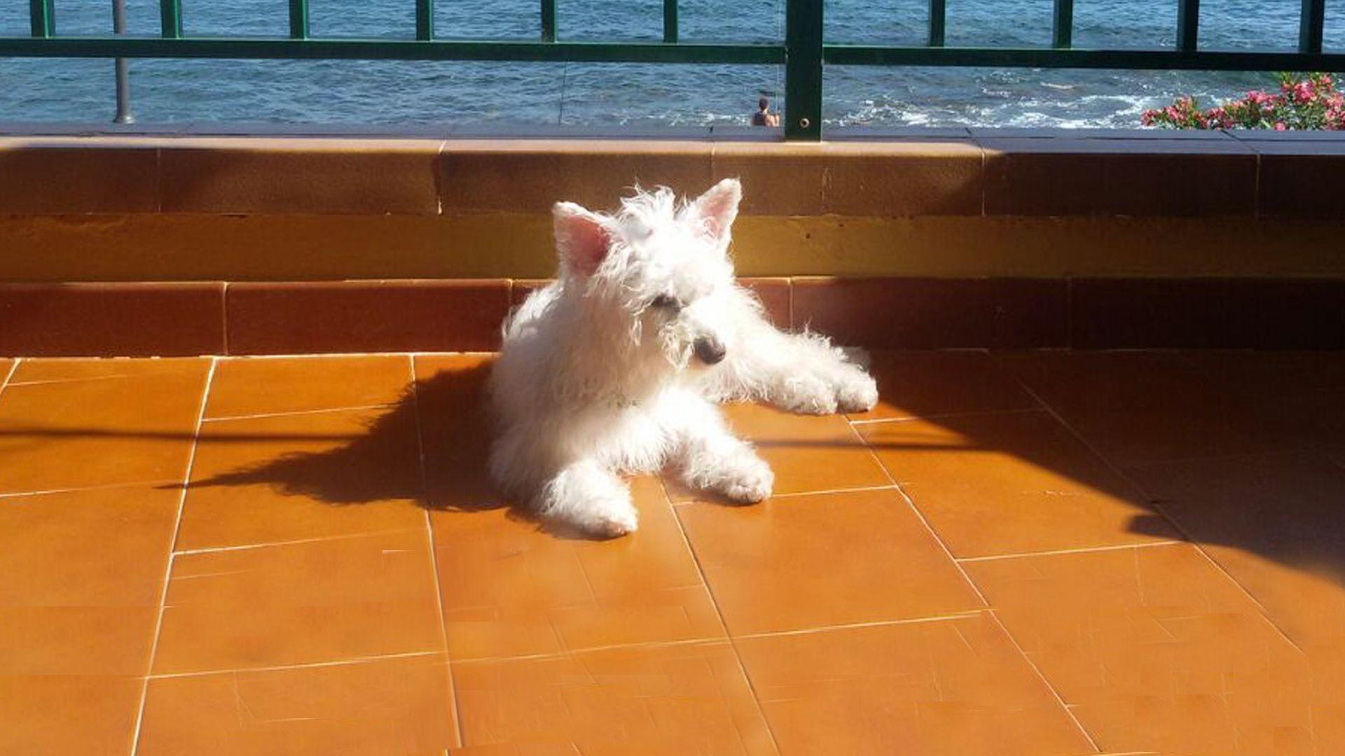 Peluquería canina en Santa Cruz de Tenerife