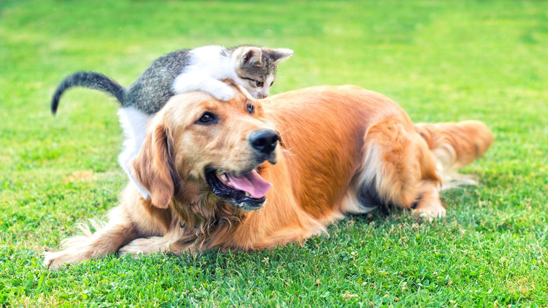Artículos para mascotas en Zaragoza