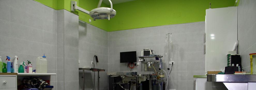 Veterinarios en Alcalá de Henares | Centro Veterinario Reyes Magos