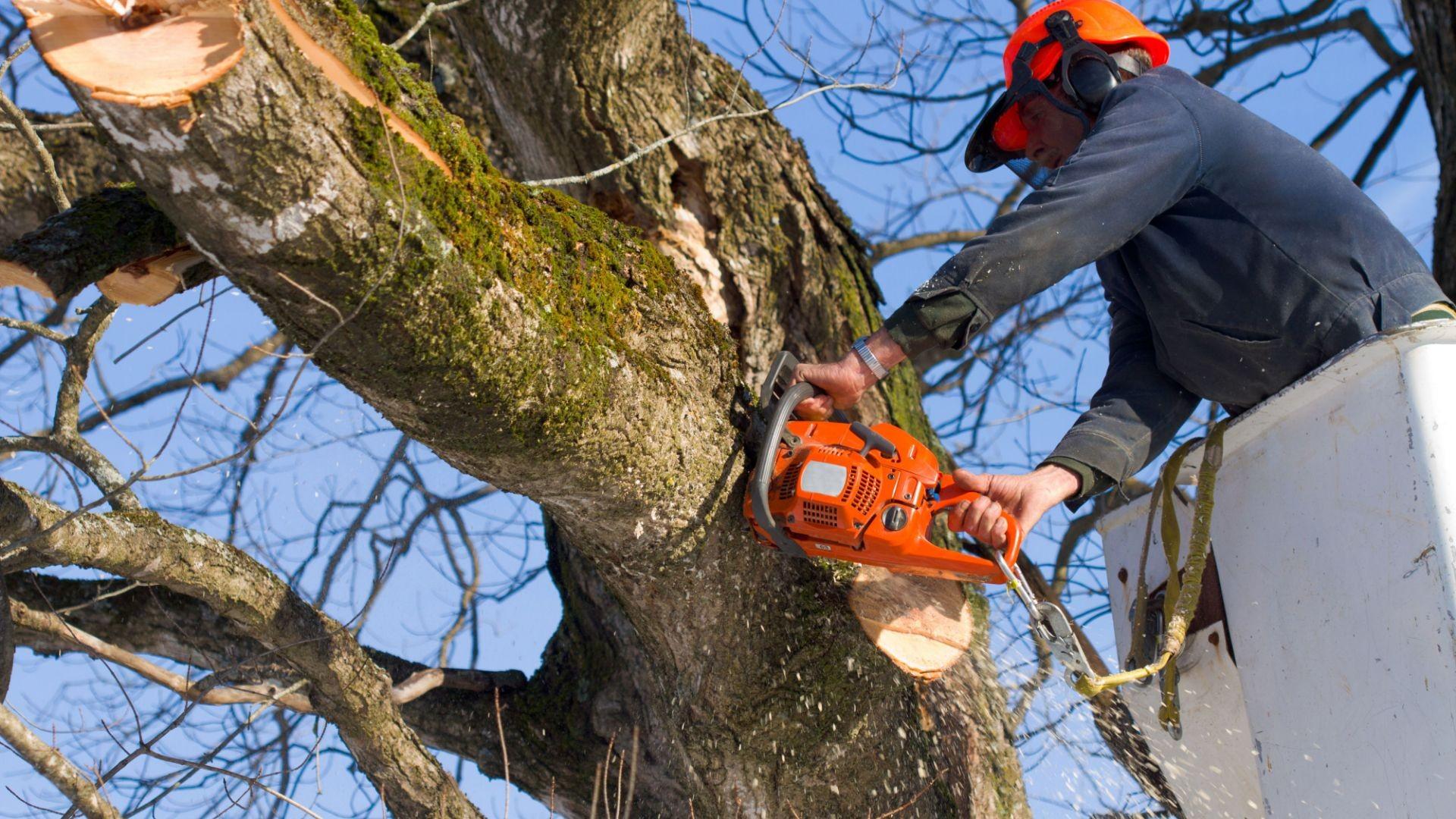 Poda y tala de árboles Zaragoza