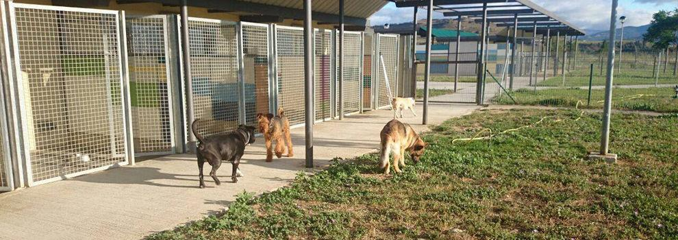 Guardería canina en Navarra - Centro Canino Andelos