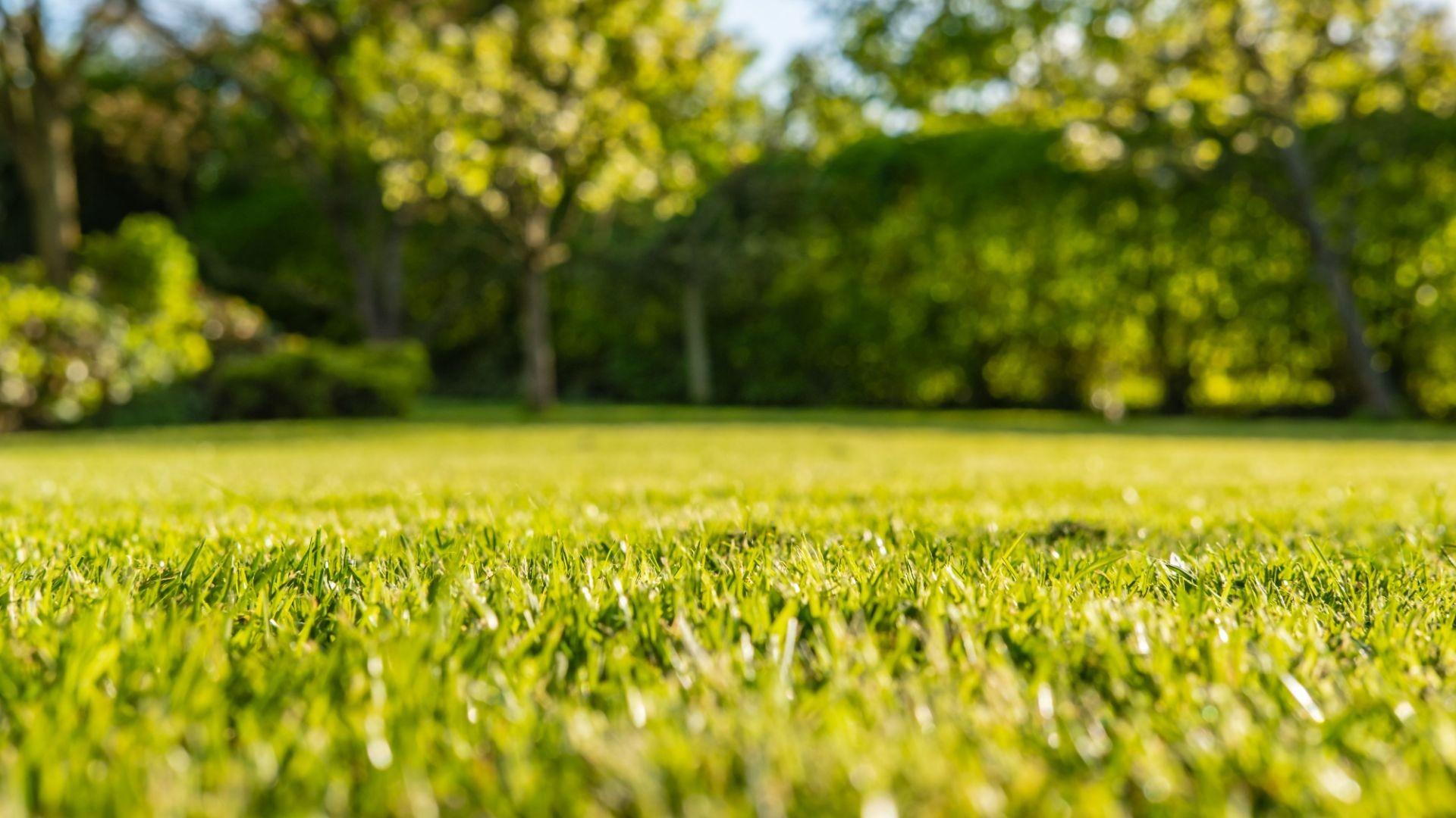 Mantenimiento de jardines en Cambrils