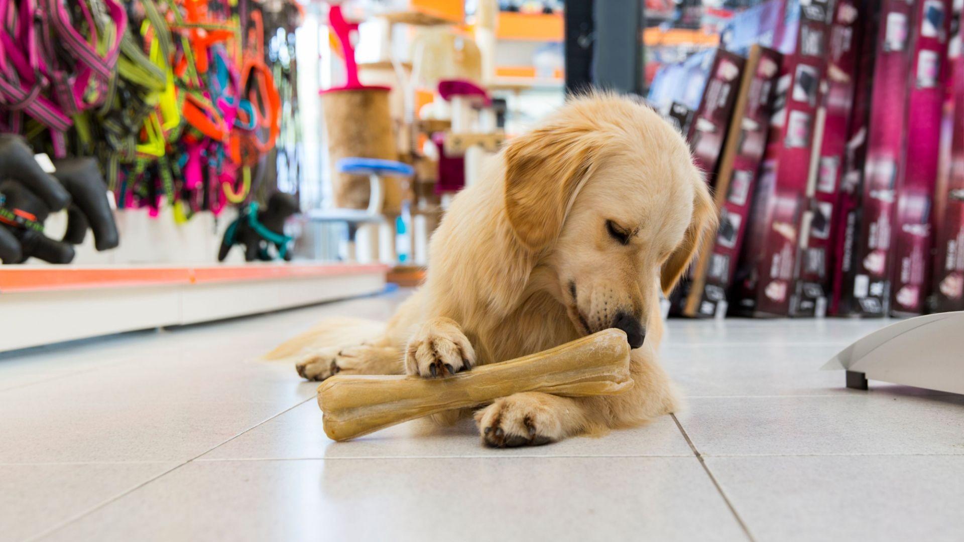 Tienda de mascotas en Ibiza