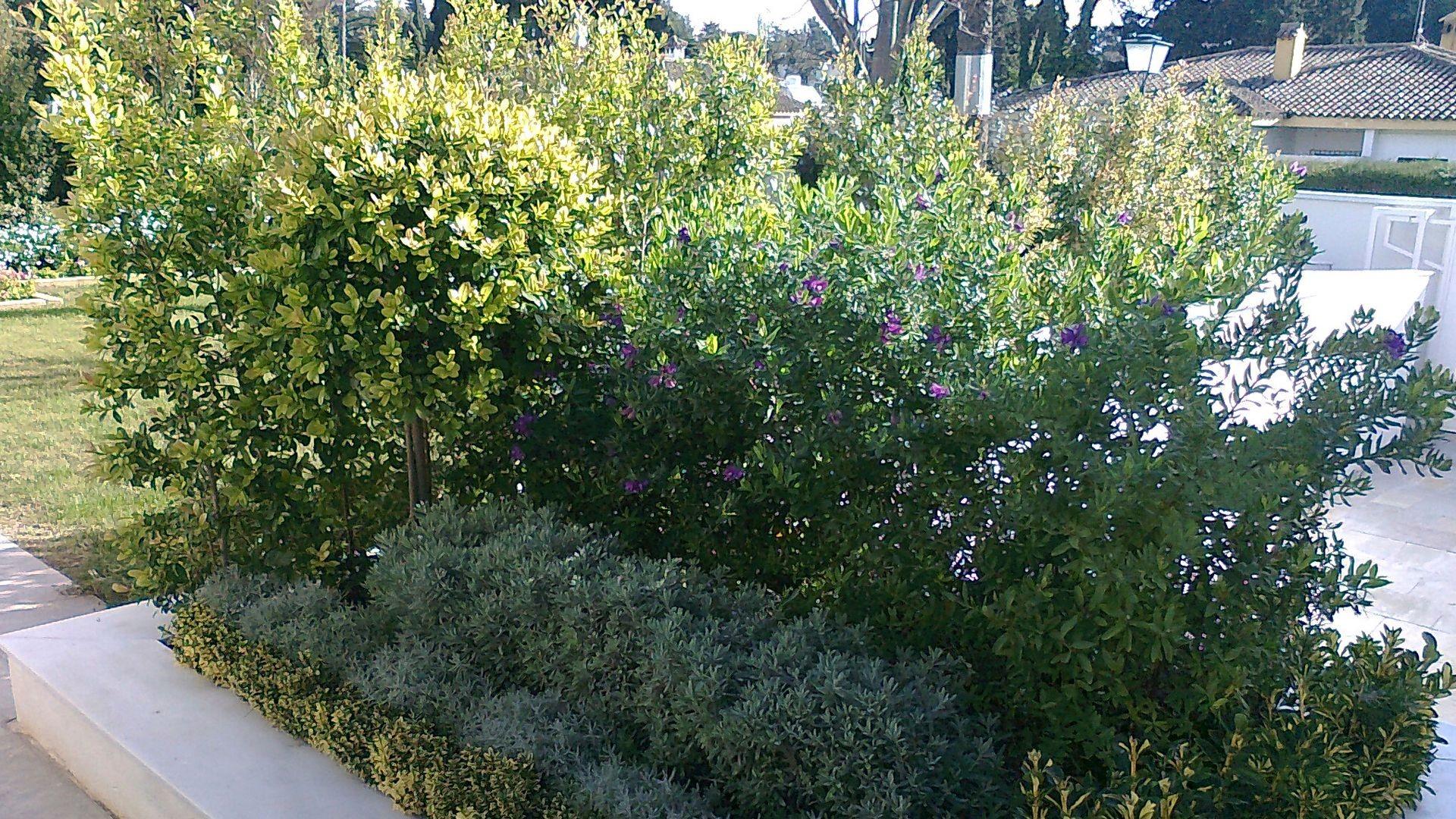 Jardinería en Jerez de la Frontera