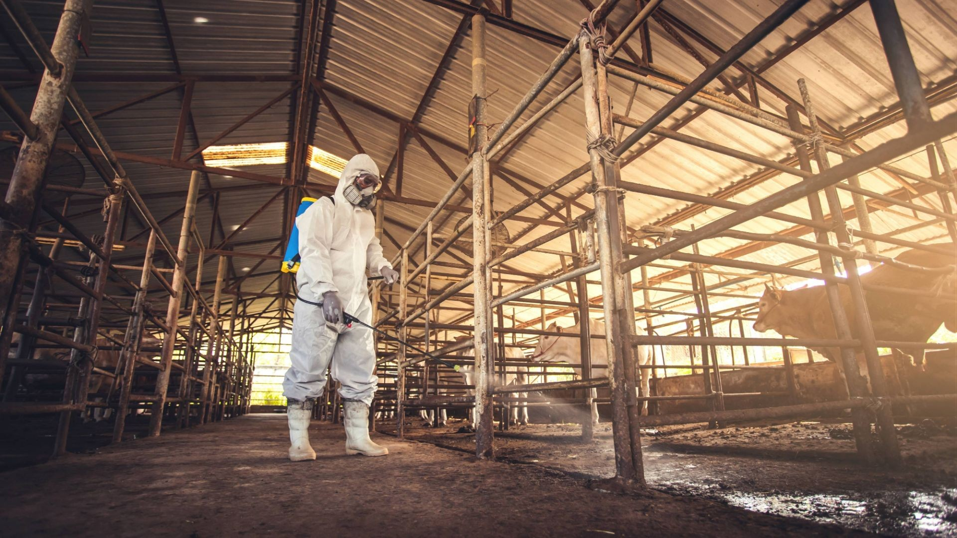 Desinfecciones certificadas en Tarragona