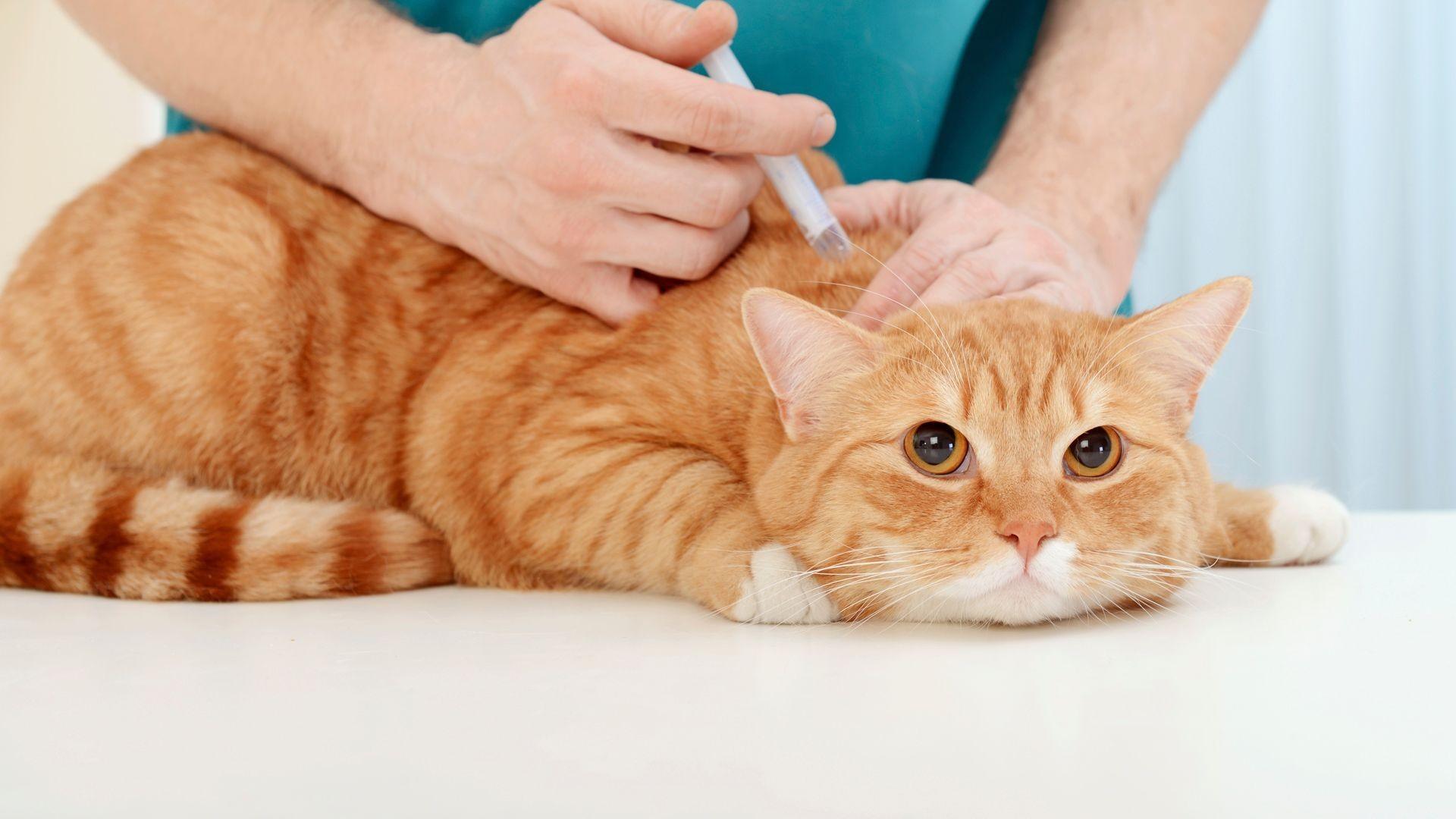 Urgencias veterinarias en Vallecas, Madrid