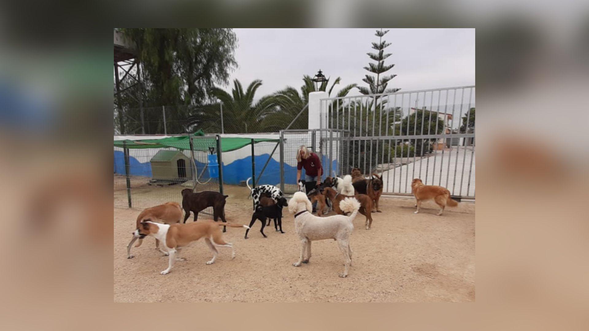 Hotel canino Playa de San Juan