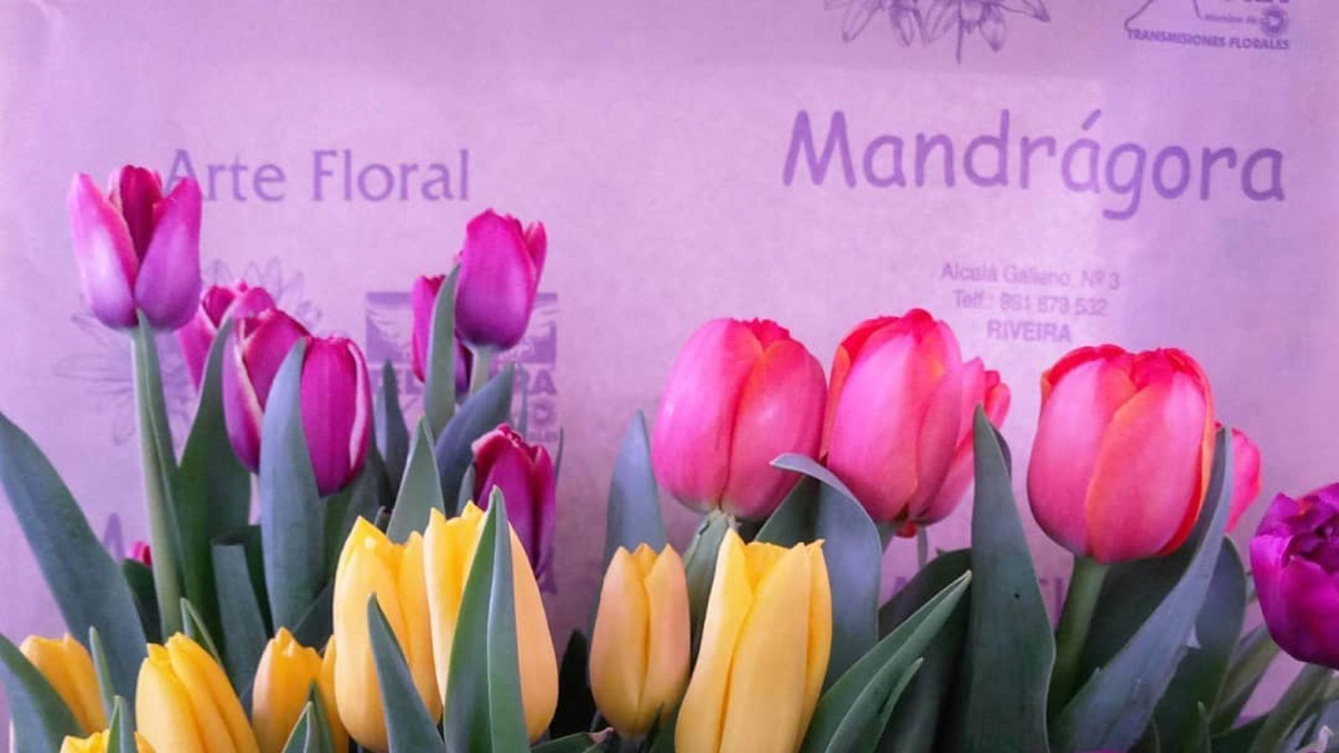 Mandragora floristería