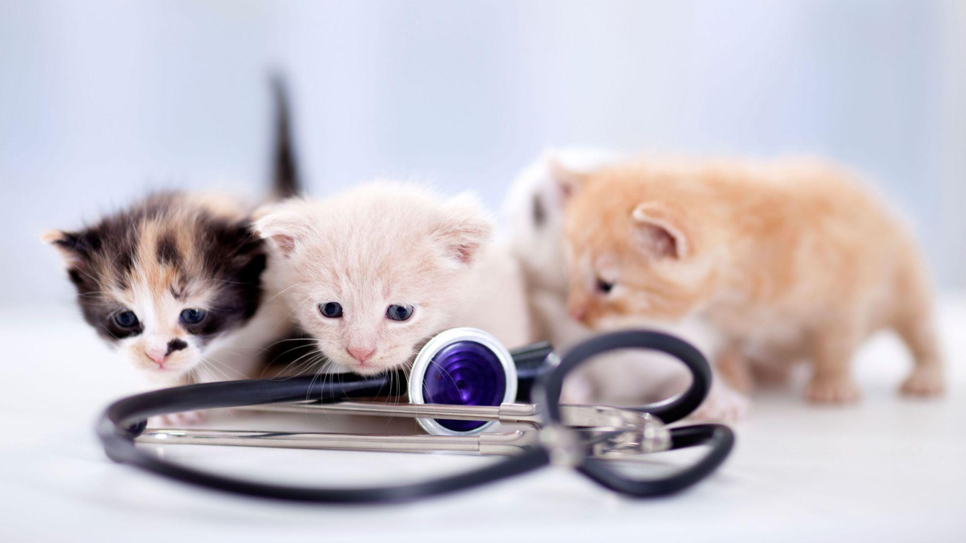 Clínica veterinaria en las Rosas (San Blas)