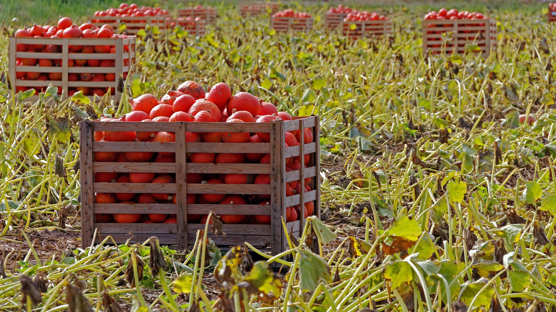 Venta de hortalizas en Zaragoza