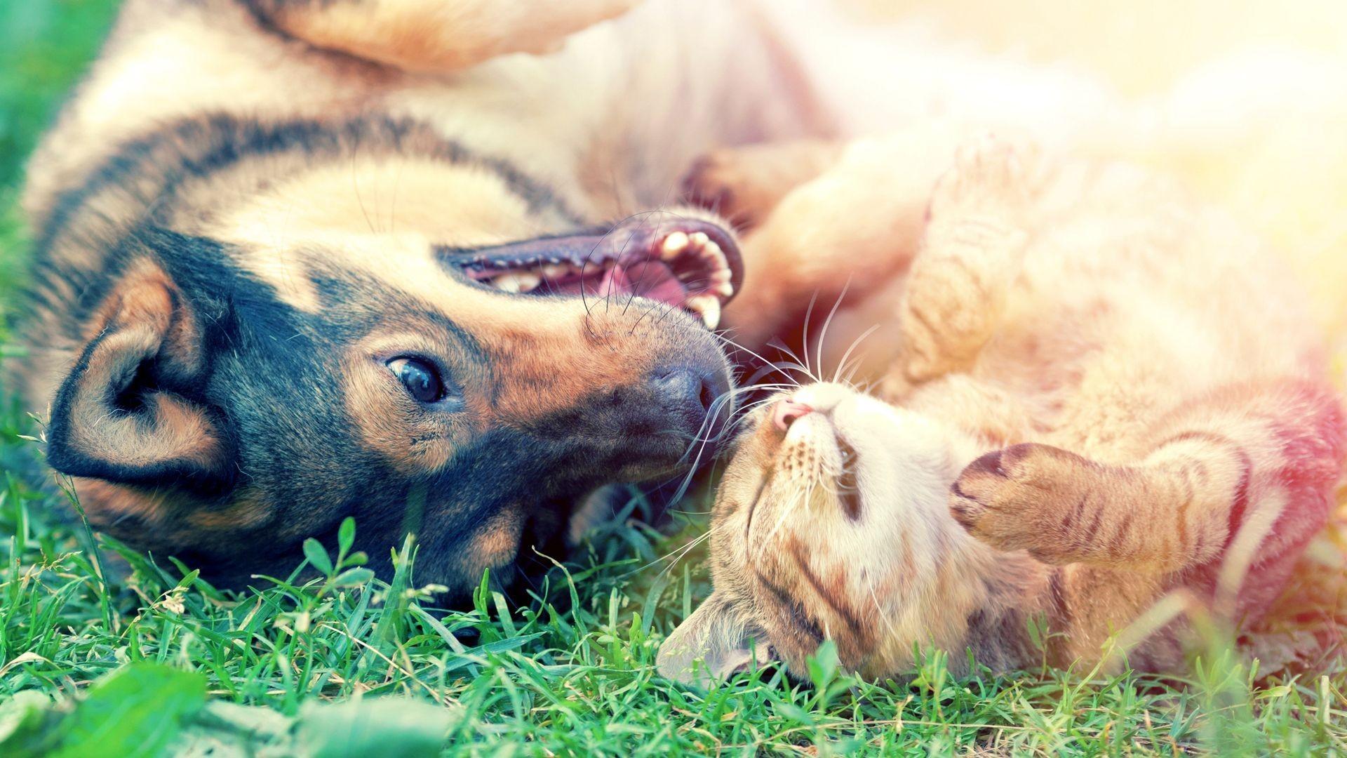 Servicio de peluquería canina y felina en Tres Cantos