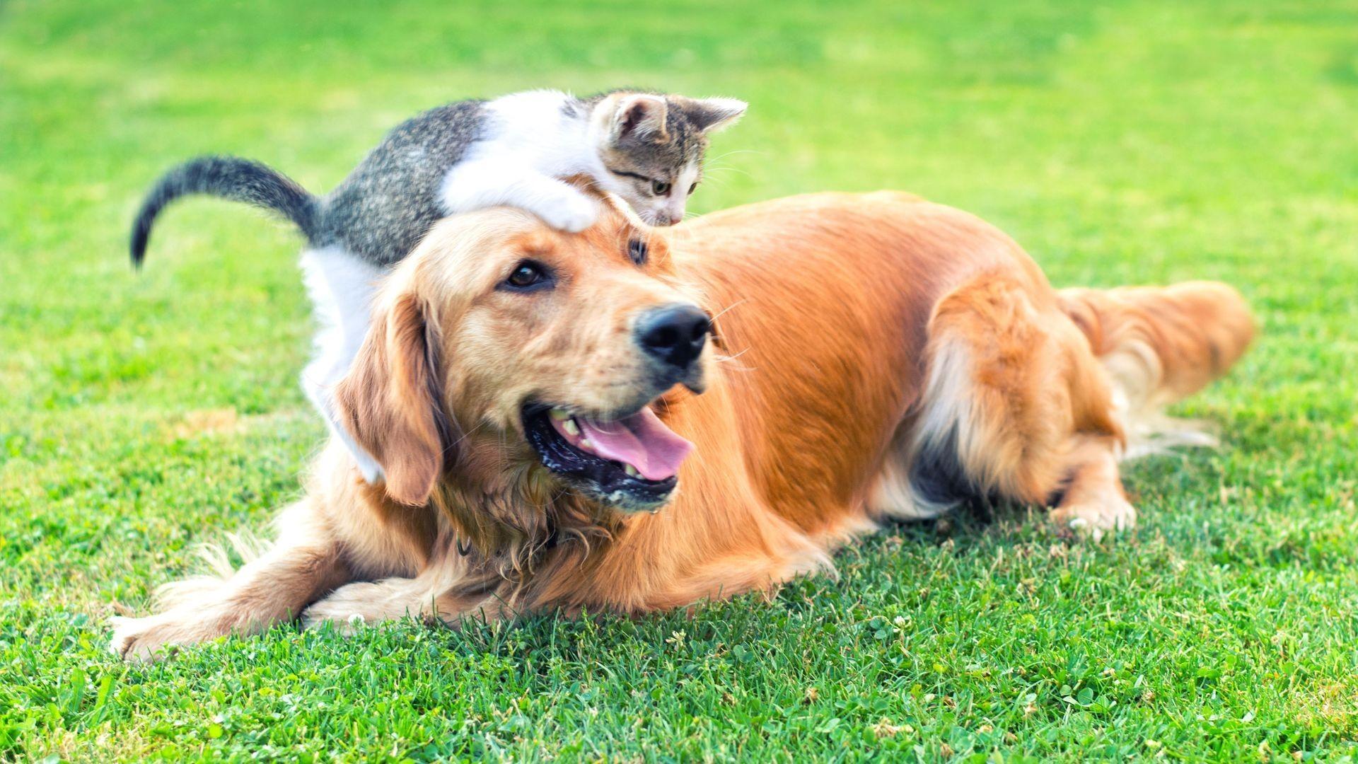 Tienda de animales en Tres Cantos