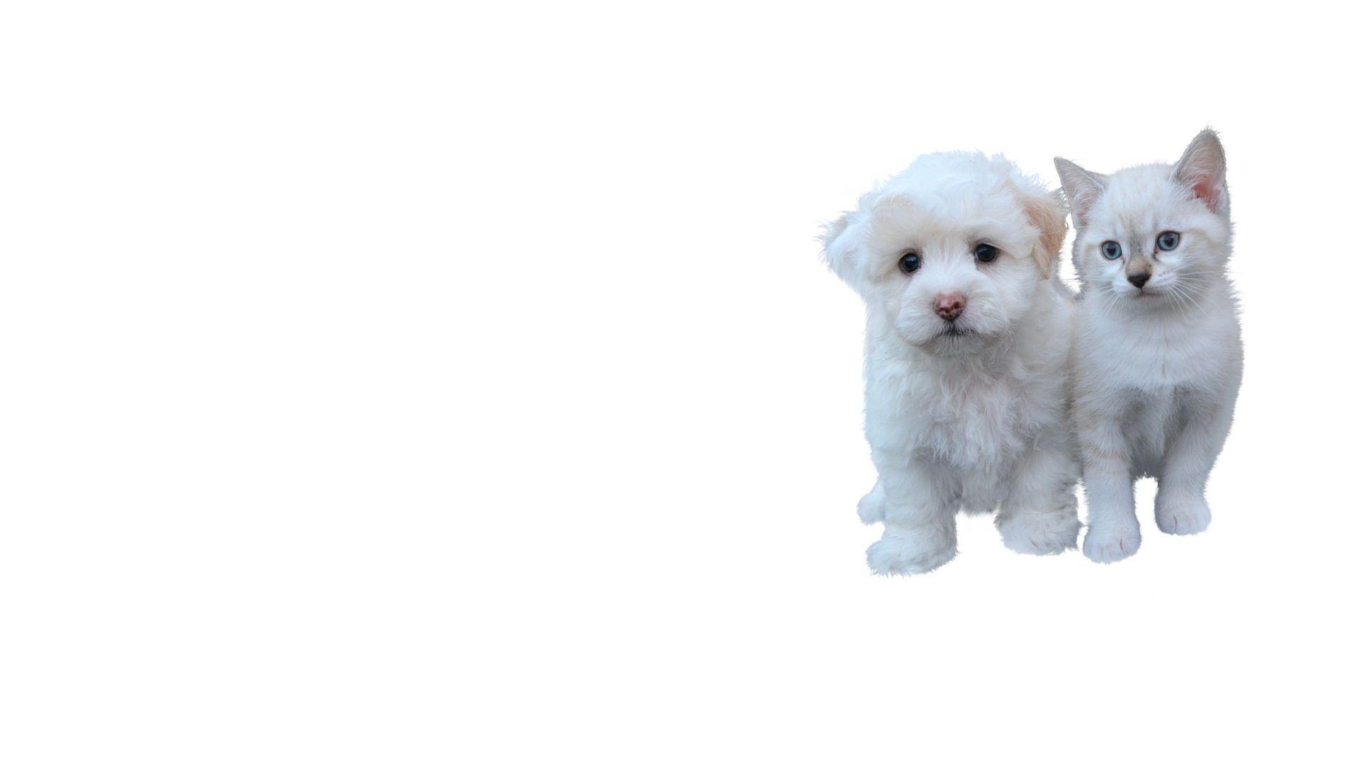 Peluquería canina y felina Montbui