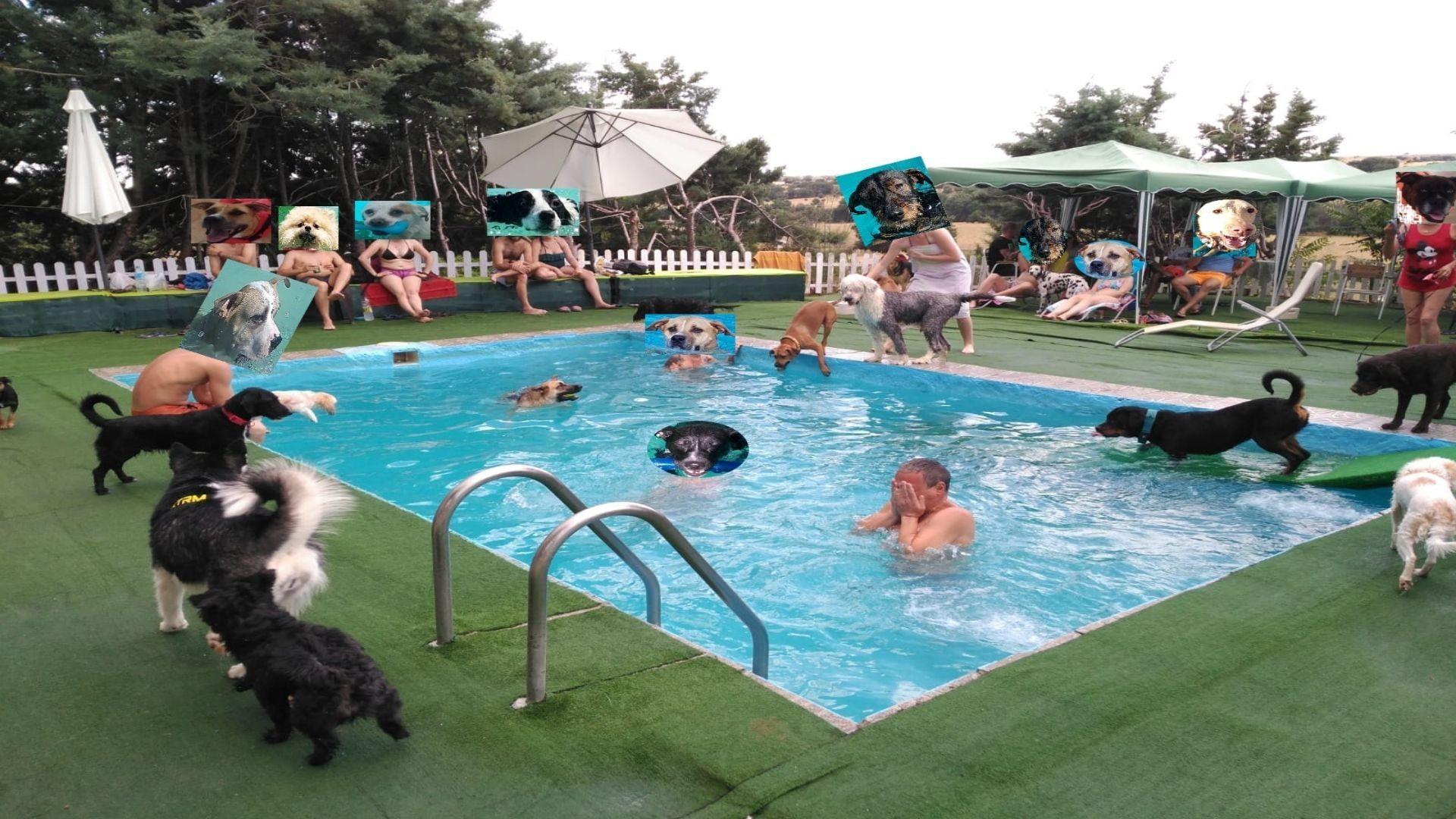 Parque acuático para Mascotas