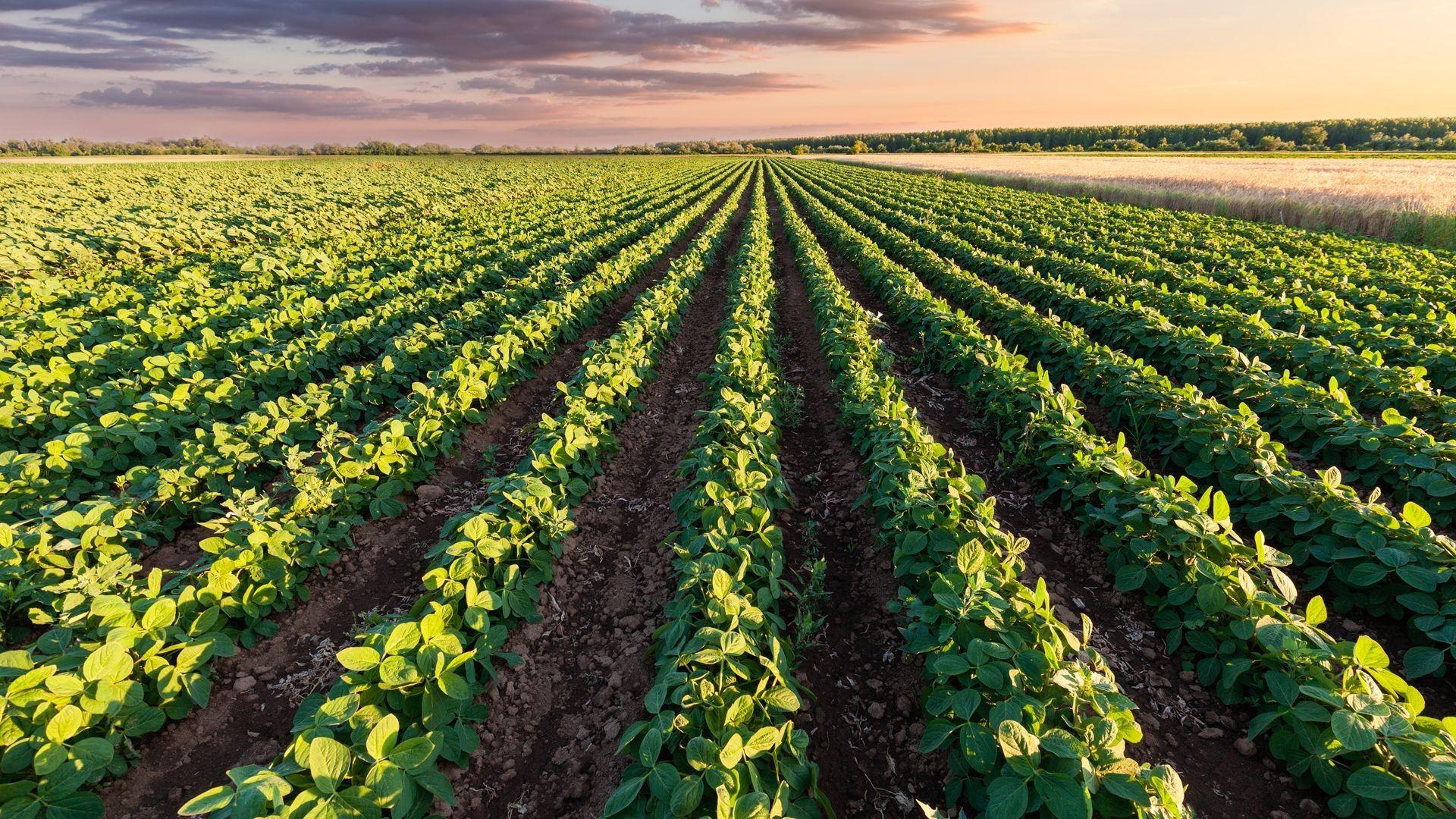 Suministros agrícolas en El Ejido