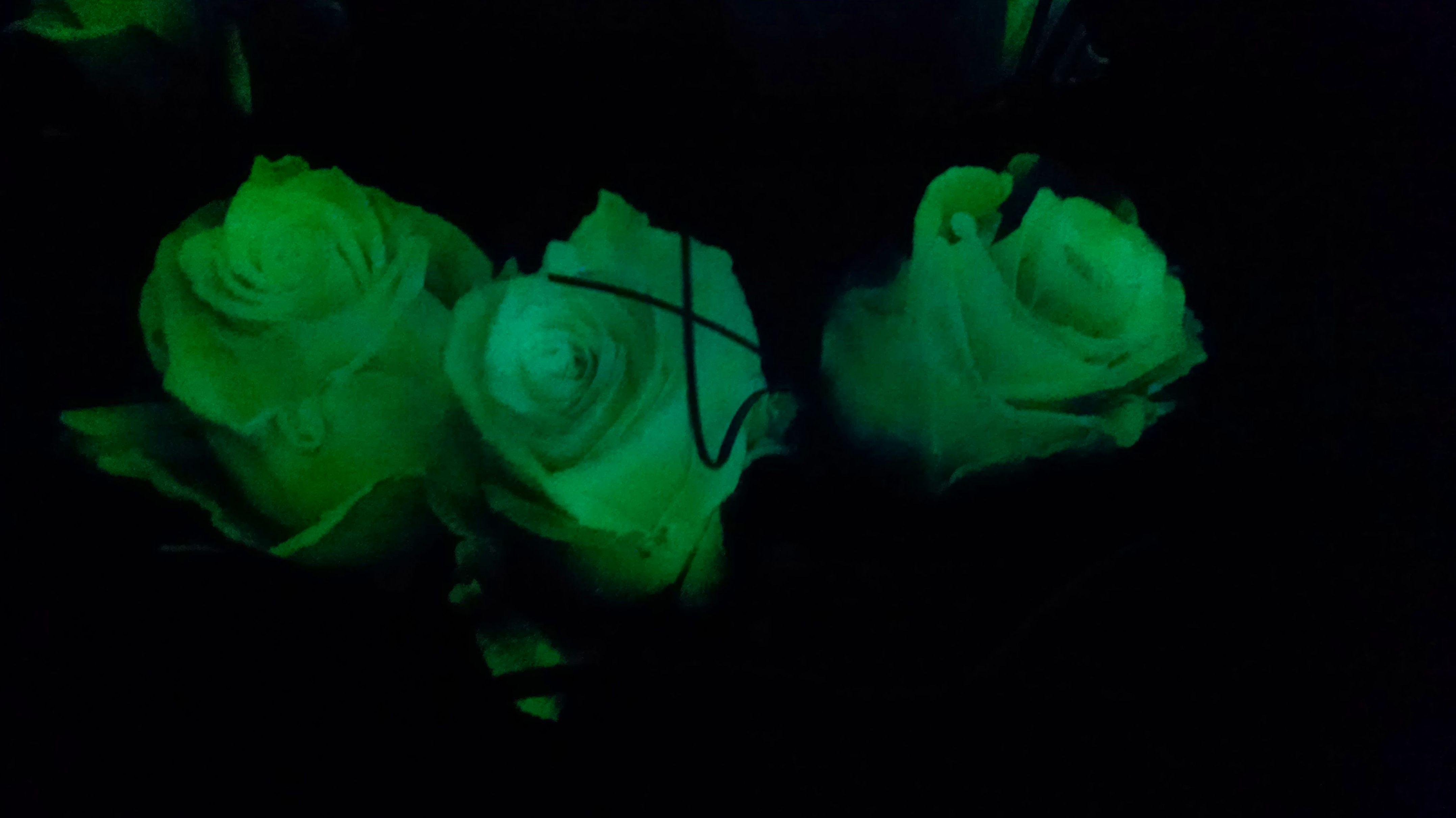 Detalle de rosas que se iluminan