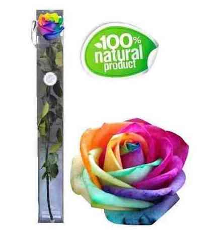 Rosa arcoíris eterna : Catálogo de Regalos de Floresdalia.com
