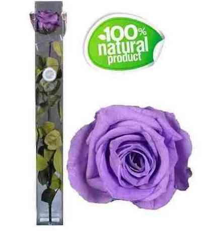 Rosa lila eterna: Catálogo de Regalos de Floresdalia.com