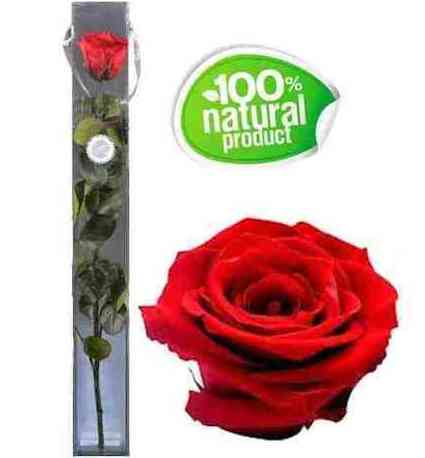 Rosa roja eterna: Catálogo de Regalos de Floresdalia.com