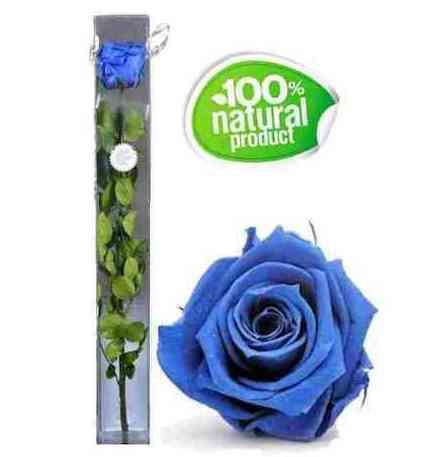 Rosa azul eterna: Catálogo de Regalos de Floresdalia.com