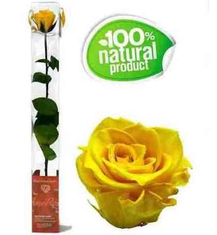 Rosa amarilla eterna: Catálogo de Regalos de Floresdalia.com