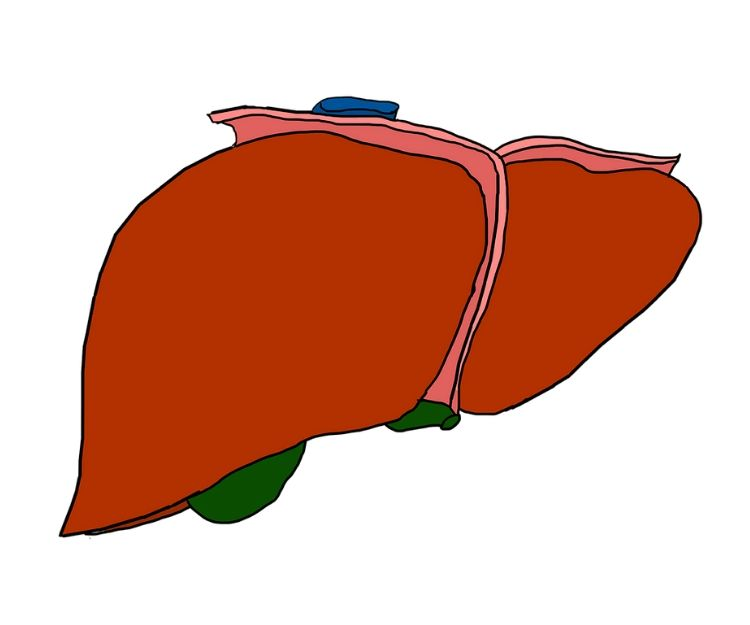 Enfermedades del hígado: Servicios médicos de Prats Alonso, E.