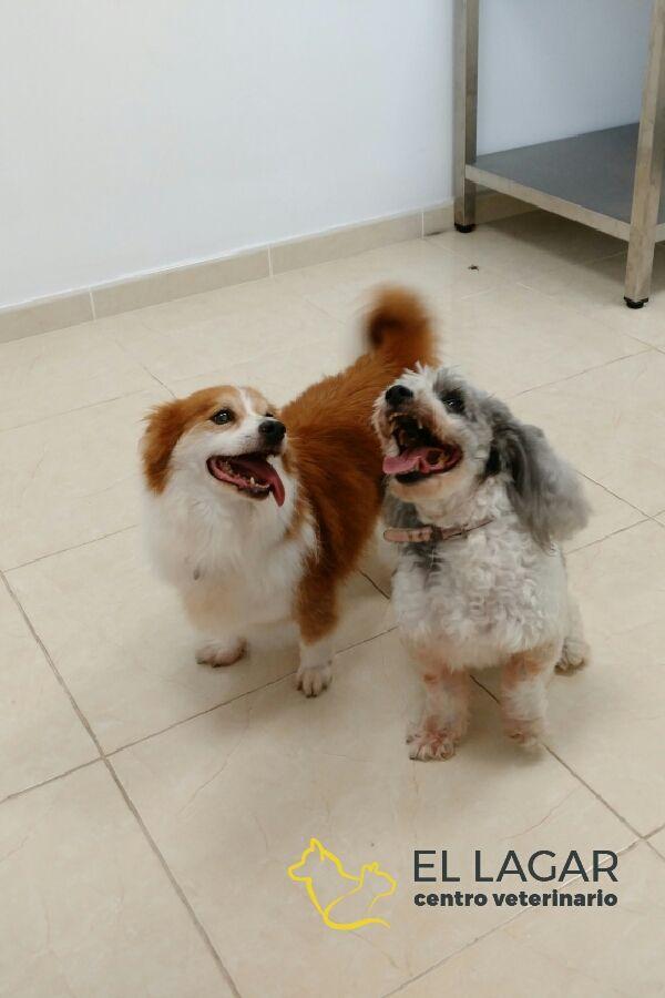 Cuidamos de tu mascota en El Sauzal