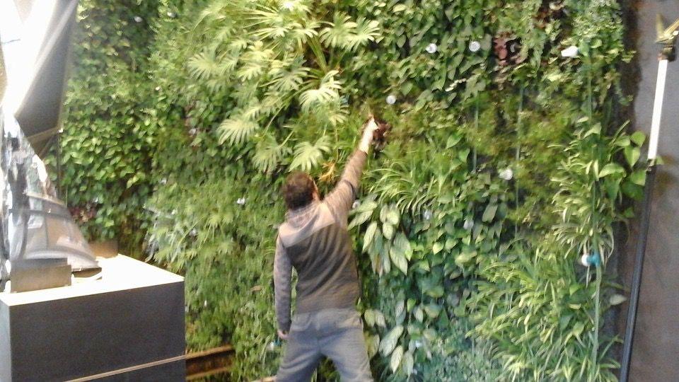 Detalles en paredes: Servicios de Garden Home Mallorca