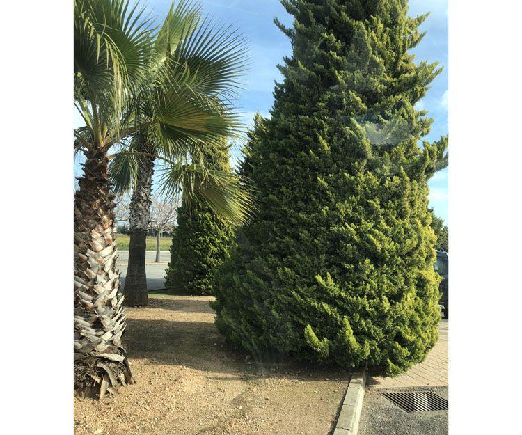 Empresa de jardinería en Mallorca