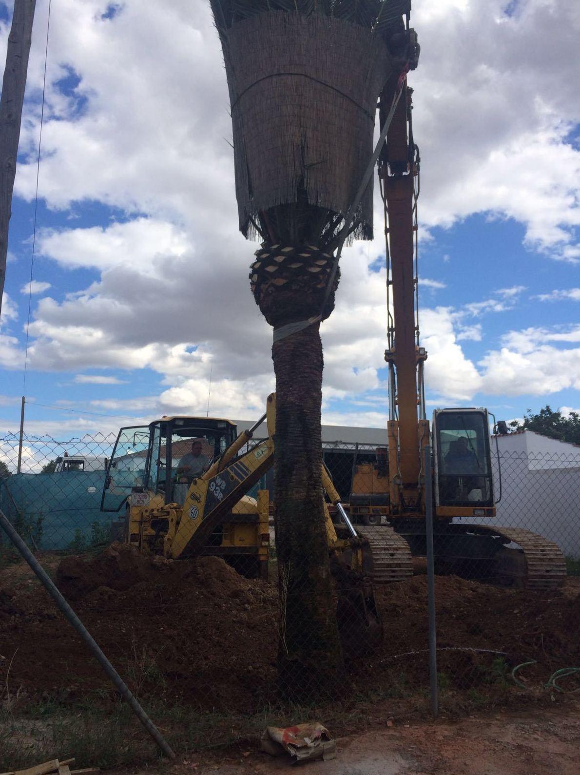 Foto 8 de Excavaciones en Navas de Tolosa | Francisco del Amo e Hijos