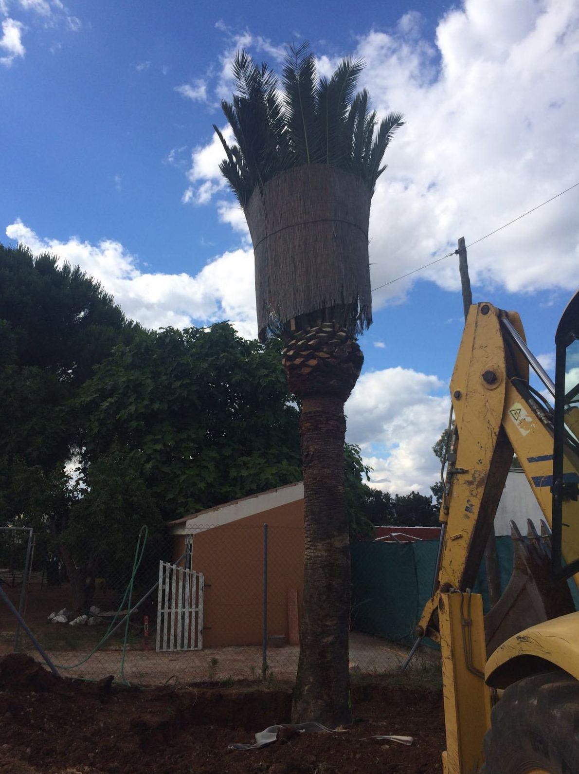 Foto 9 de Excavaciones en Navas de Tolosa | Francisco del Amo e Hijos
