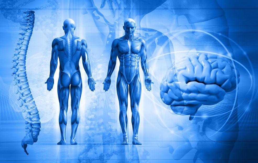 Equilibrio global del cuerpo y la mente