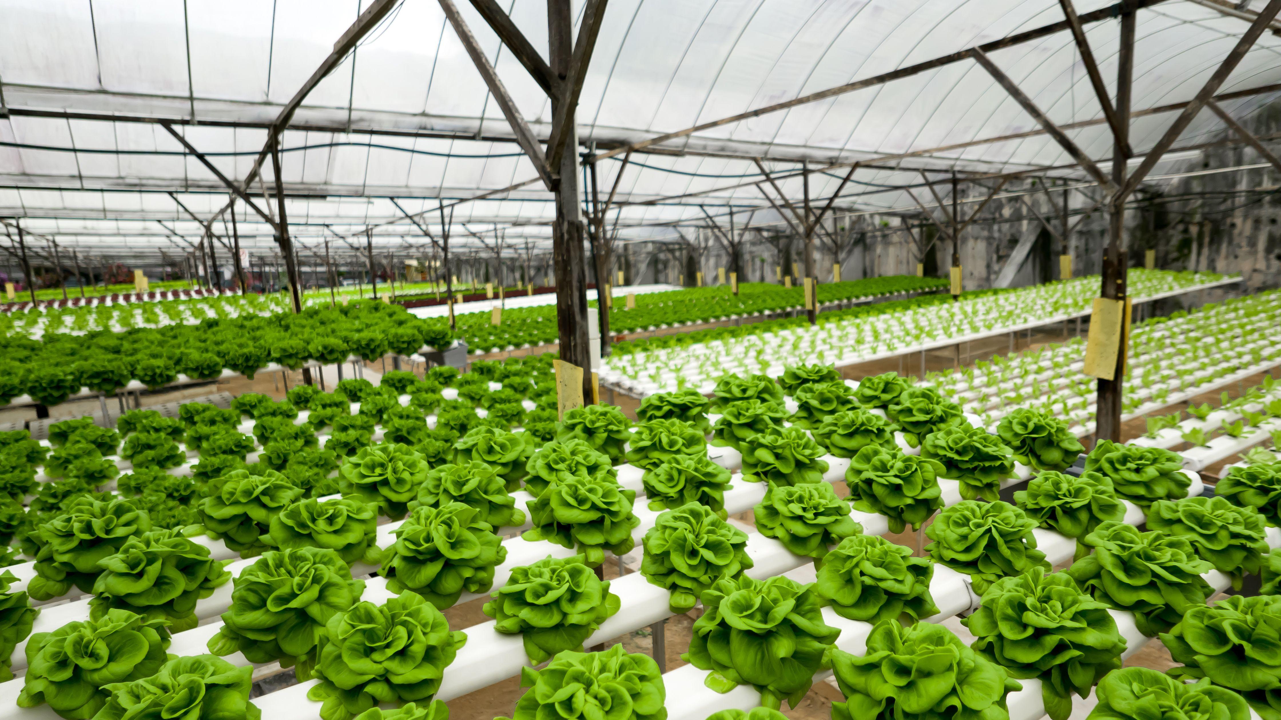 Cultivo de plantas agrícolas y forestales