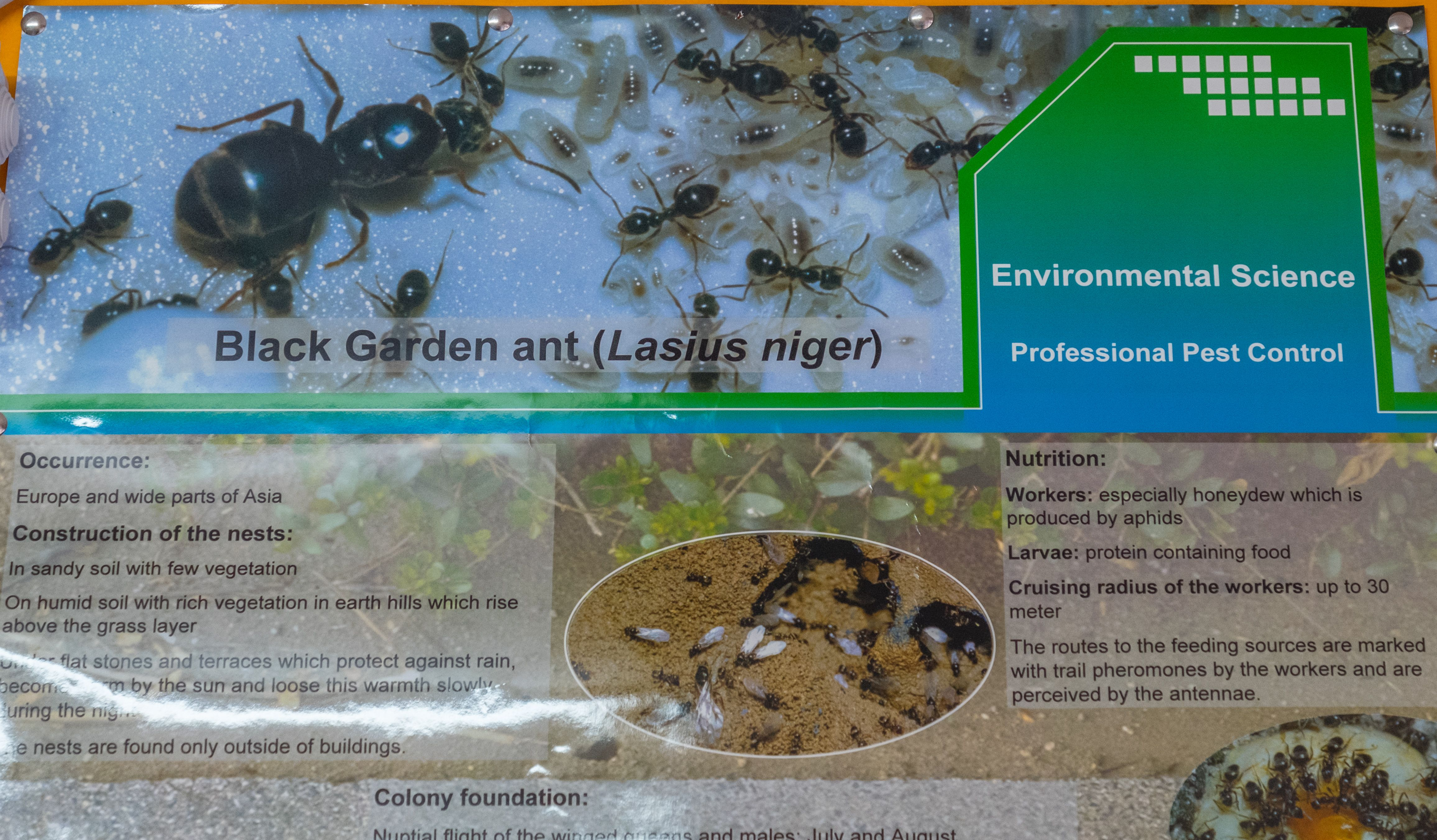 Control de plagas: insectos, roedores y aves en Sant Andreu, Barcelona