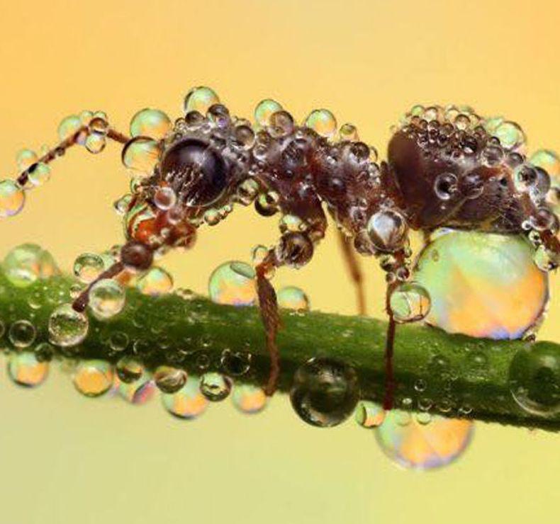 Tratamientos para hormigas en Tarragona