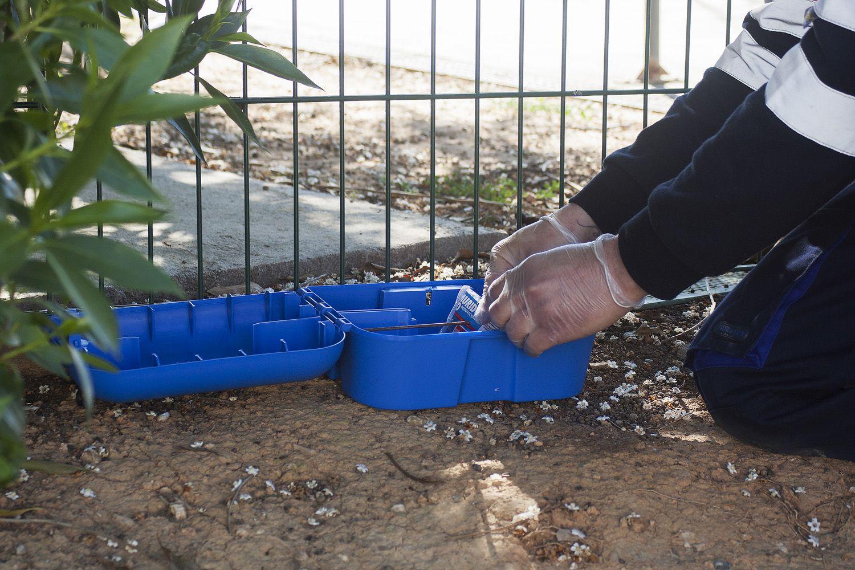 Control de roedores en Tarragona