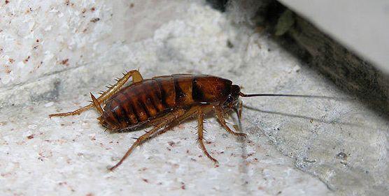 Eliminación de cucarachas en Tarragona
